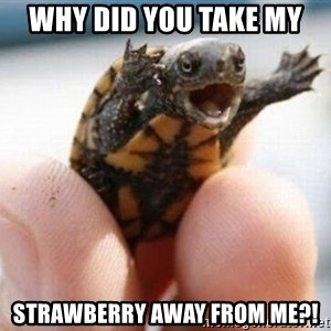 angry turtle - why did you take my strawberry away from me?!