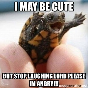 angry turtle - i may be cute but stop laughing lord please im angry!!!
