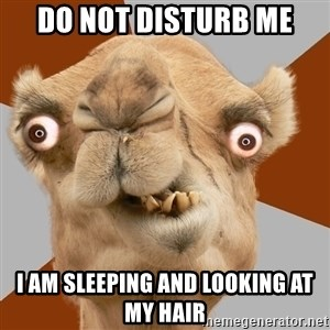 Crazy Camel lol - DO NOT DISTURB ME I AM SLEEPING AND LOOKING AT MY HAIR