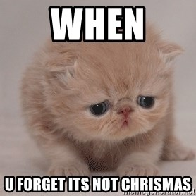 Super Sad Cat - when  u forget its not chrismas