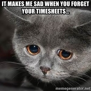 sad cat - It makes me sad when you forget your timesheets...