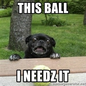 Ermahgerd Pug - This ball I needz it