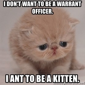 Super Sad Cat - I don't want to be a Warrant Officer. I ant to be a kitten.