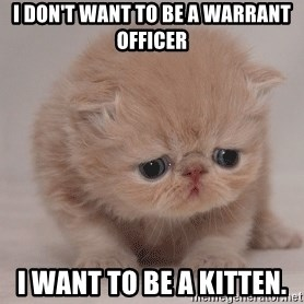 Super Sad Cat - I don't want to be a Warrant Officer I want to be a Kitten.