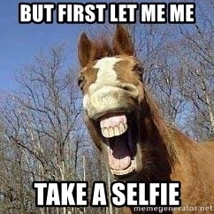 Horse - But First let me Me Take A Selfie