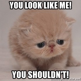 Super Sad Cat - You look like me! you shouldn't!