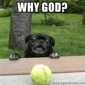 Ermahgerd Pug - why god?
