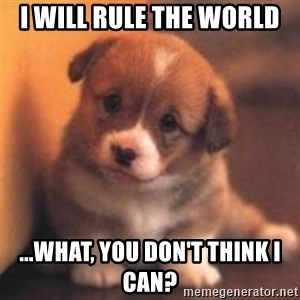 cute puppy - i will rule the world ...what, you don't think i can?