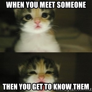 Adorable Kitten - when you meet someone then you get to know them