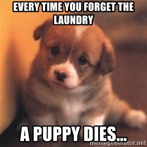 cute puppy - Every time you forget the laundry A puppy dies...