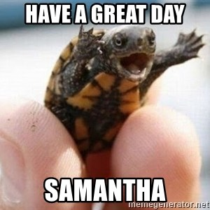 angry turtle - Have a great day  Samantha