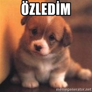 cute puppy - Özledİm