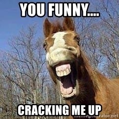 Horse - you funny.... cracking me up