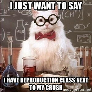 Chemistry Cat - i just want to say i have reproduction class next to my crush