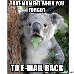 surprised koala - That moment when you forgot to e-mail back