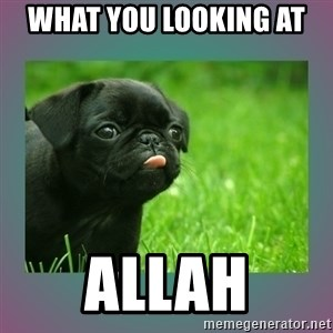 derp - what you looking at  ALLAH