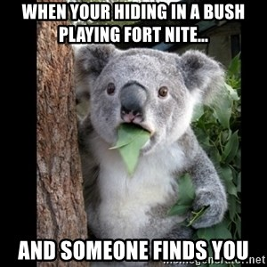 Koala can't believe it - When your hiding in a bush playing fort nite... And someone finds you