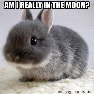 ADHD Bunny - am i really in the moon?
