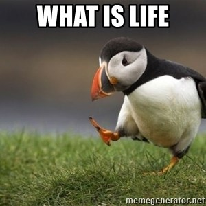 Unpopular Opinion Puffin - what is life