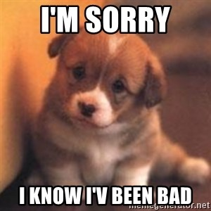 cute puppy - I'm sorry  I know I'v been bad
