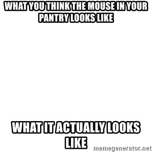 Blank Template - What you think the mouse in your pantry looks like What it actually looks like