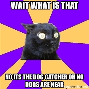 Anxiety Cat - WAIT WHAT IS THAT NO ITS THE DOG CATCHER OH NO DOGS ARE NEAR