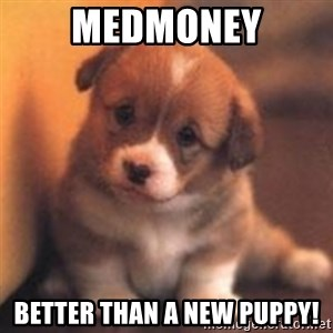 cute puppy - MedMoney Better than a new puppy!