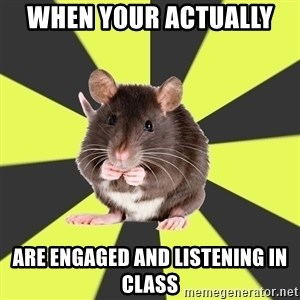 Survivor Rat - When your actually  are engaged and listening in class