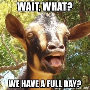 Illogical Goat - Wait, What? We have a FULL day?