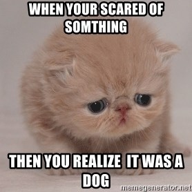 Super Sad Cat - when your scared of somthing  then you realize  it was a dog