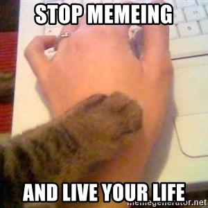 It's time to stop cat - stop memeing and live your life