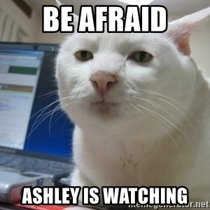 Serious Cat - Be Afraid Ashley is watching