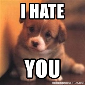 cute puppy - I hate  you