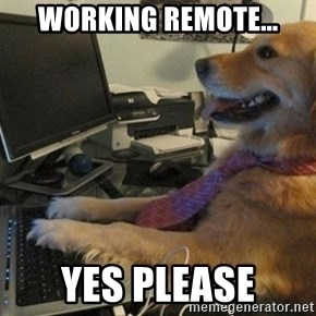 I have no idea what I'm doing - Dog with Tie - Working Remote... Yes please