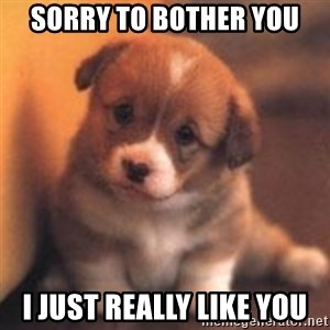 cute puppy - Sorry to bother you I just really like you