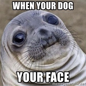 Awkward Seal - when your dog  your face