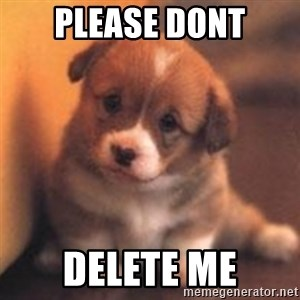 cute puppy - PLEASE DONT DELETE ME
