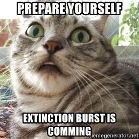 scared cat - Prepare yourself Extinction Burst is comming