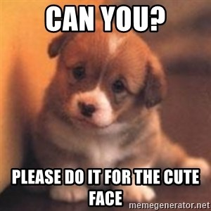 cute puppy - Can you? Please do it for the cute face