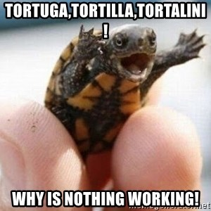 angry turtle - Tortuga,tortilla,tortalini! why is nothing Working!