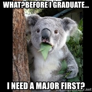 Koala can't believe it - what?before i graduate... I need a major first?