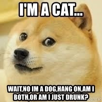 dogeee - i'm a cat... wait,no im a dog,hang on,am i both,or am i just drunk?