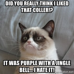 Grumpy cat good - did you really think i liked that coller!? it was purple with a jingle bell... i hate it!