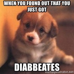 cute puppy - When you found out that you just got Diabbeates