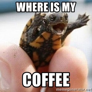 angry turtle - Where is my coffee