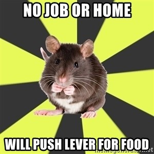 Survivor Rat - No job or home Will push lever for food