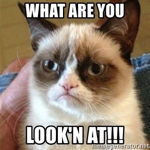 Grumpy Cat  - what are you look'n at!!!