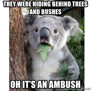 surprised koala - They were hiding behind trees and bushes  Oh it's an ambush