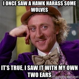 Willy Wonka - I once saw a hawk harass some wolves It's true, I saw it with my own two ears