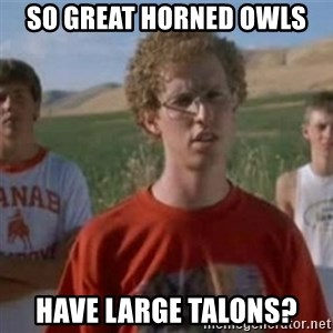 Napoleon Moped Grom - so great horned owls have large talons?